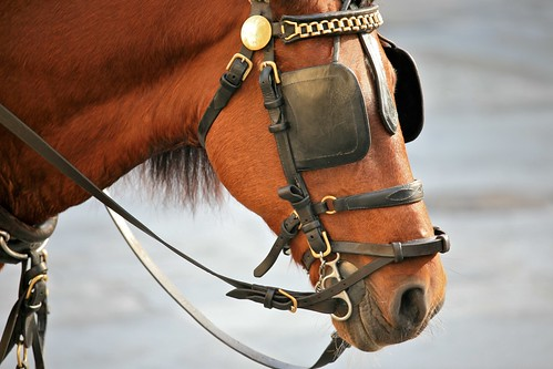 Horse Blinkers