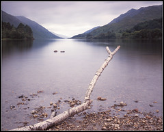 Loch Shiel (spodzone) Tags: uk longexposure tree landscape dead scotland highlands branch hills shore watersedge distance largeformat lochshiel glenfinnan rant shenhao naturewatcher