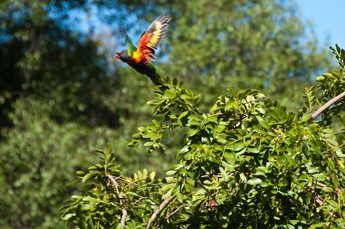 Adelaide Botanical Gardens