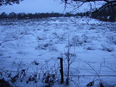 Moorweide im Schnee (feuermelder2009) Tags: ammerland wildenloh