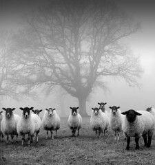 Tree Guardians (Threadweavle) Tags: sheep portfolio likethis idream topseven thelittledoglaughed alwaysexc updatecollection magicunicornverybest magicunicornmasterpiece —obramaestra— threadweavle ldlnoir