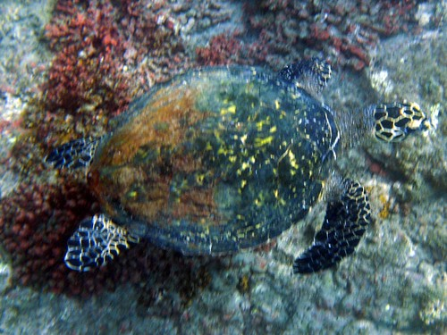 costa rica underwater 017
