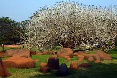 20091230-151732 (Sandip Bhattacharya) Tags: december 2009 pondicherry puducherry