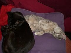 I love my big brother (cox-on-the-box - art, clay, cats, veg) Tags: catnipaddicts