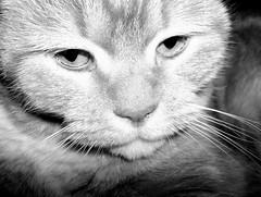 (derit) Tags: white black animal cat casa felino gatto bianco nero animale
