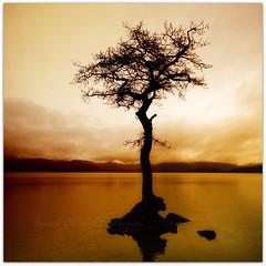That Bloody Tree Again! Soz :0) (Samantha Nicol Art Photography) Tags: snow tree water silhouette square bay scotland nikon branches hills loch samantha toned lomond nicol balmaha milarrochy