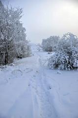 (hector melo) Tags: snow cold sexy blanco landscape mujer sweden stockholm nieve paisaje colores nia vegetation invierno labios sonrisa culo winterwhite mirada hermosa frio hielo estocolmo suecia cuerpo piel vegetacionice