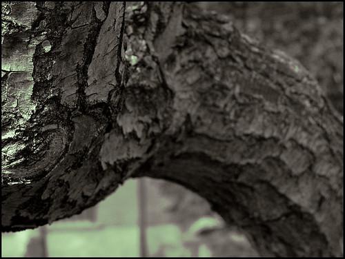 Tronco árbol