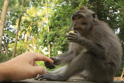 Offering my hand to a Monkey