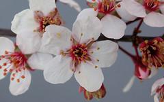 flower-DSCN0984