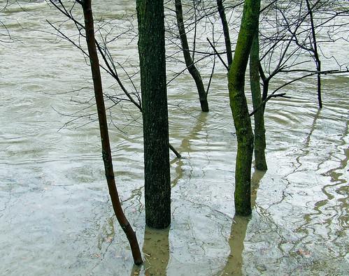 Little Juniata in flood