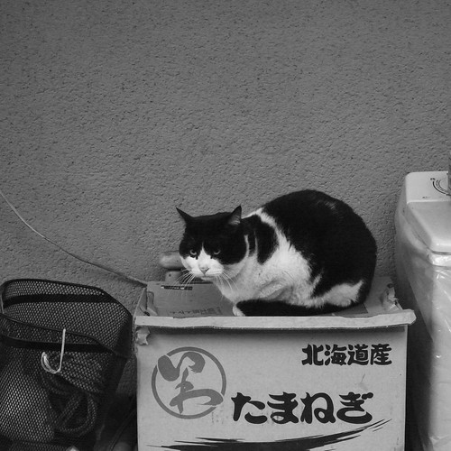 Today's Cat@2010-01-26