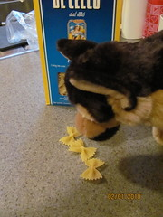 A stuffed dog showing interest in pasta