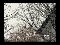 fugle_310110 (fruNielsen (Helle Klitgaard)) Tags: snow cold denmark vinter februar sne arden birdsinmygarden frunielsen helleklitgaard