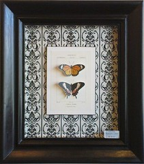 3D Butterflies (Fine Art Framing) Tags: picture framing