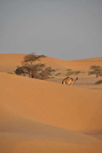 Dream desert