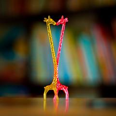 giraffes choose a partner for life