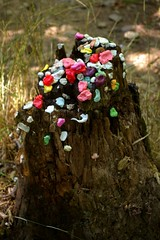 Gum on Stump
