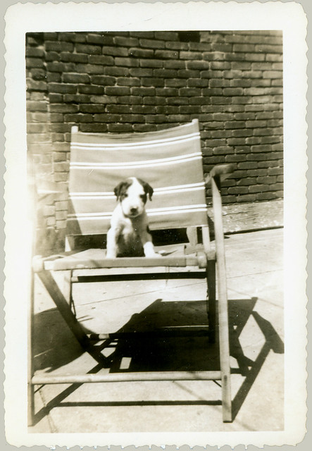 Doggie in a Deck Chair