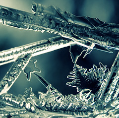 The Enchanted Forest (~aspidistra~) Tags: blue sculpture macro ice 50mm crossprocessed nikon bokeh 4 coffeeshop explore filter pse actions hmb d90 53365