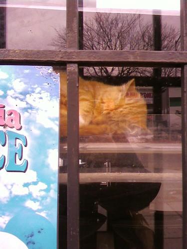 Cat Nap 022310