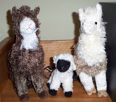 Alpacas and Sheep