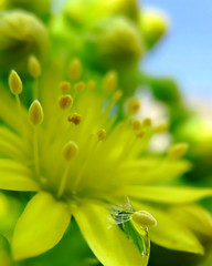 bright, bright sunshiney day (Darwin Bell) Tags: flowers sky flower macro nature yellow cactusflower anawesomeshot colorphotoaward artofimages bestcapturesaoi elitegalleryaoi mygearandmepremium
