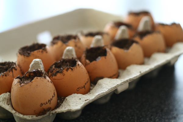 Carton of Seeded Egg shells.