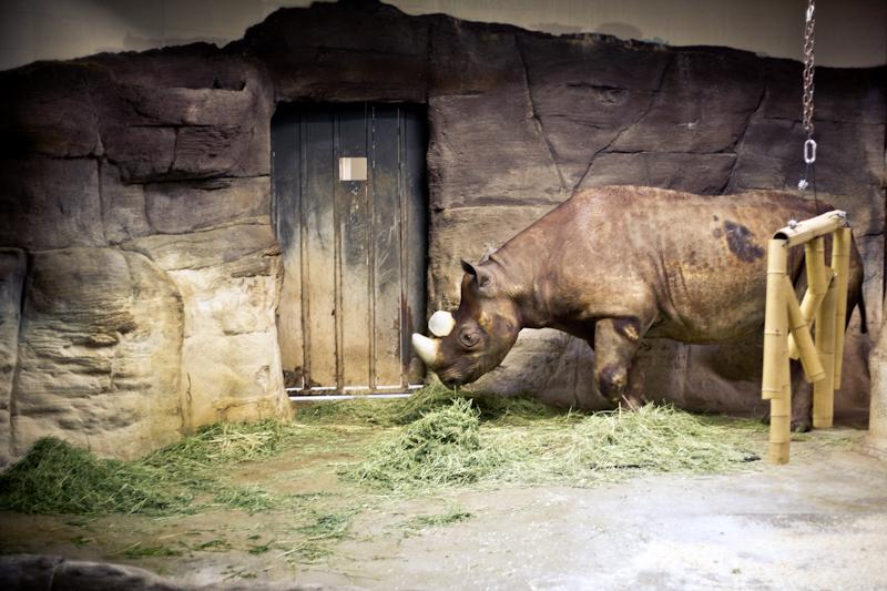 Zoo (8 of 15)