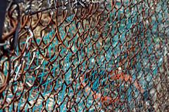 garden fence 008
