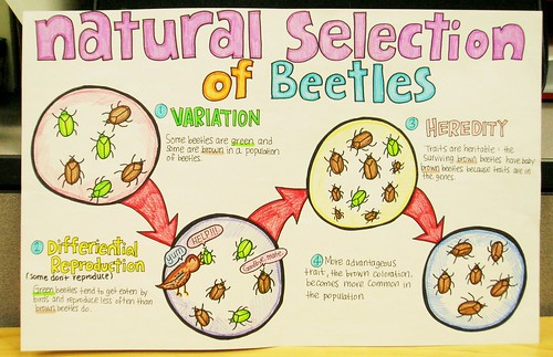 What Does Natural Selection Mean In Science Terms