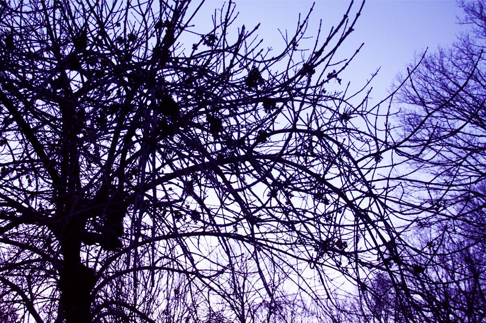 trees at sundown