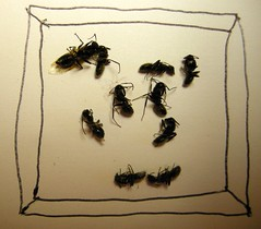 Framed Ants (ricko) Tags: paper dead drawing framed insects ants