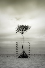 The lonely tree thing (KC Tan Photography) Tags: tree beach sand indianocean indiana overcast perth cottesloe sculpturebythesea westernaustralia nab sculptor lonelytree cottesloebeach blueduck nationalaustraliabank blackwhitephotos afsdxzoomnikkor1755mmf28gifed bestcapturesaoi nikond300s tripleniceshot