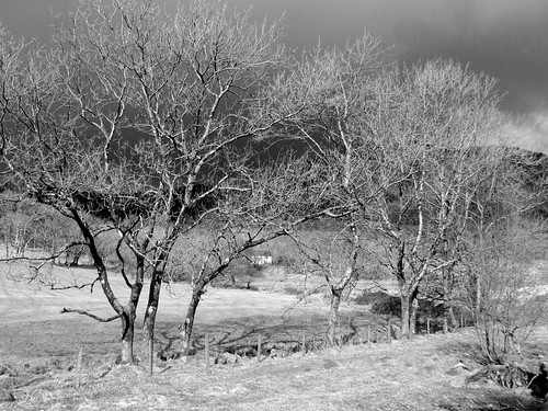 Trees near Bwlchglas lead mine