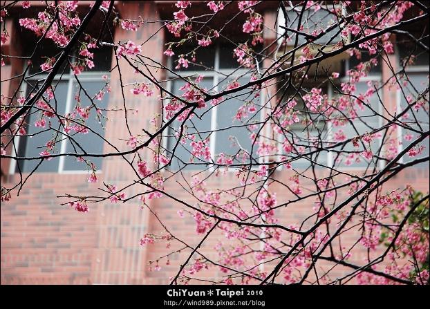 陽明山花卉試驗中心06.jpg