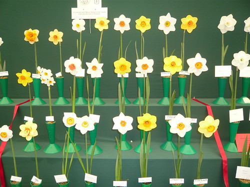 Daffodil Exhibition display