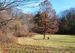 Corbett's Glen (blmiers2) Tags: autumn newyork fall nature landscape geotagged brighton hbm corbettsglen corbetts corbettsglennaturepark benchmonday happybenchmonday blm18 blmiers2