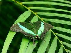 emerald - P1050269