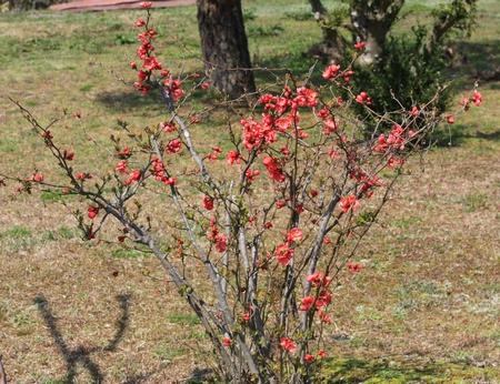 三永水源地 に咲く花2