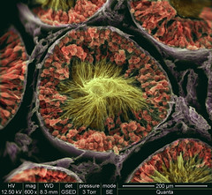 Spaghetti Junction (FEI Company) Tags: fei microscopy magnification nanotechnology electronmicroscope nanoimage feicompany microscopyimage quantafamily feiimagecontest