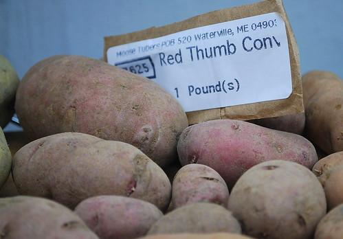 Red Thumb Seed Potatoes