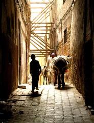 Menino e o burro de carga nas ruas de Fes, Marrocos (Gisela Scheinpflug) Tags: africa fes marrocos
