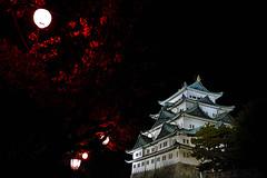 [フリー画像] 建築・建造物, 宮殿・城, 夜景, 日本, 愛知県, 201007311500
