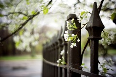 Force of Nature (Dr. RawheaD) Tags: flower fence lumix dof bokeh f14 panasonic kern 25mm switar dmcgf1 h16rx