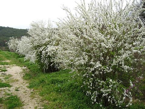 芝桜の名所 花夢の里 ロクタン20