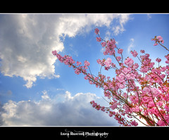 Guardando un po' pi in su... (Luca Rusconi) Tags: wood pink flowers blue light sky cloud flower clouds canon eos luca rainbow nuvole nuvola blu flash rosa ii cielo fiori fiore hdr luce legno 430 pianta speedlite 450d rusconi wonderfulworldofflowers