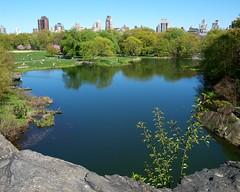 Turtle Pond, Central Park, New York City (jag9889) Tags: city nyc lake ny newyork castle pond turtle centralpark manhattan belvederecastle 2010 olmsted vaux y2010 jag9889