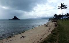 Kualoa Regional Park @ Kaneohe, Oahu ((^_~) [MARK'N MARKUS] (~_^)) Tags: hawaii oahu kaneohe kualoa kualoaregionalpark hnlapr10