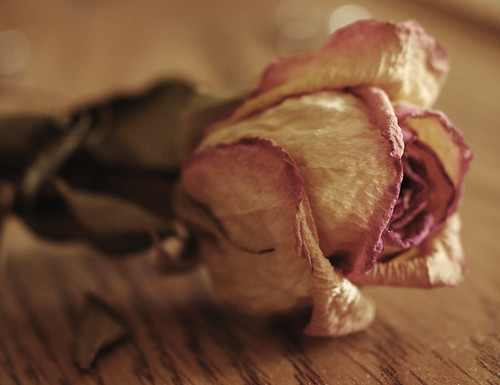 dried rose 2